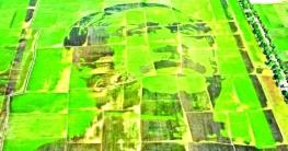 বিশ্বরেকর্ডের অপেক্ষায় 'শস্যচিত্রে বঙ্গবন্ধু'
